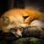 da-FOX