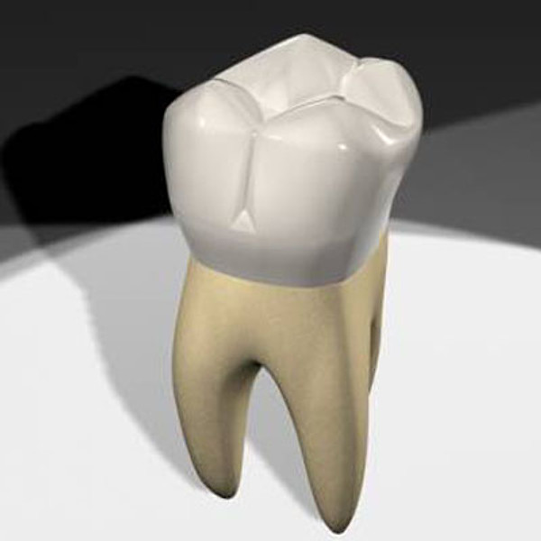 how to model molar teeth of a human grabcad questions
