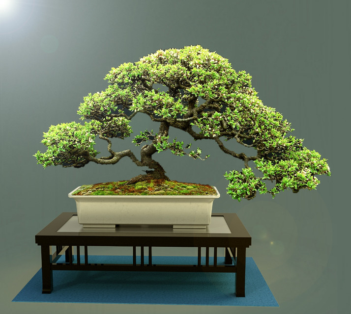 Bonsai Tree On Display 3d Cad Model Library Grabcad