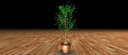 Small potted Tree