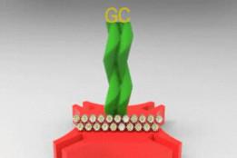 Golden Gear Award 2012