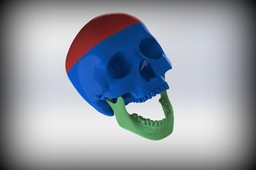 3-parts Anatomical Skull Model