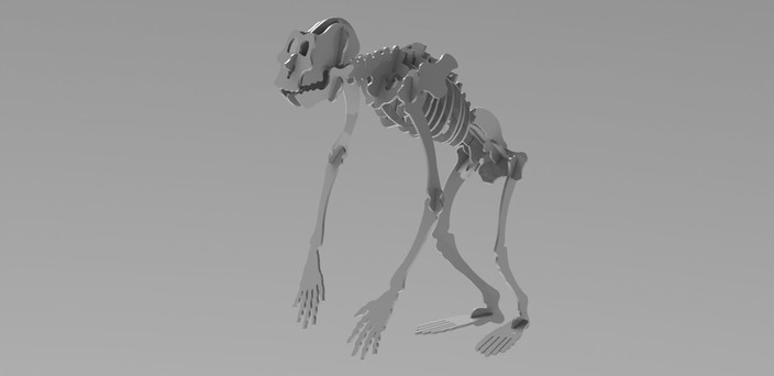 Woodcraft APE Skeleton