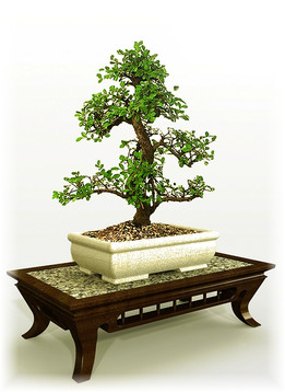 Bonsai (Table and Dish)
