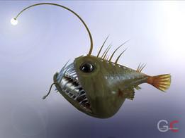 Angler fish - ANGUS