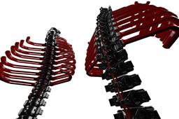 paXcyborG Ribs on backbone
