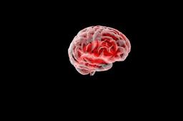 "Brain, ""the brain"""