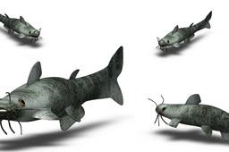Fish Aquarium - 38 Models, 100+ renderings, one download!