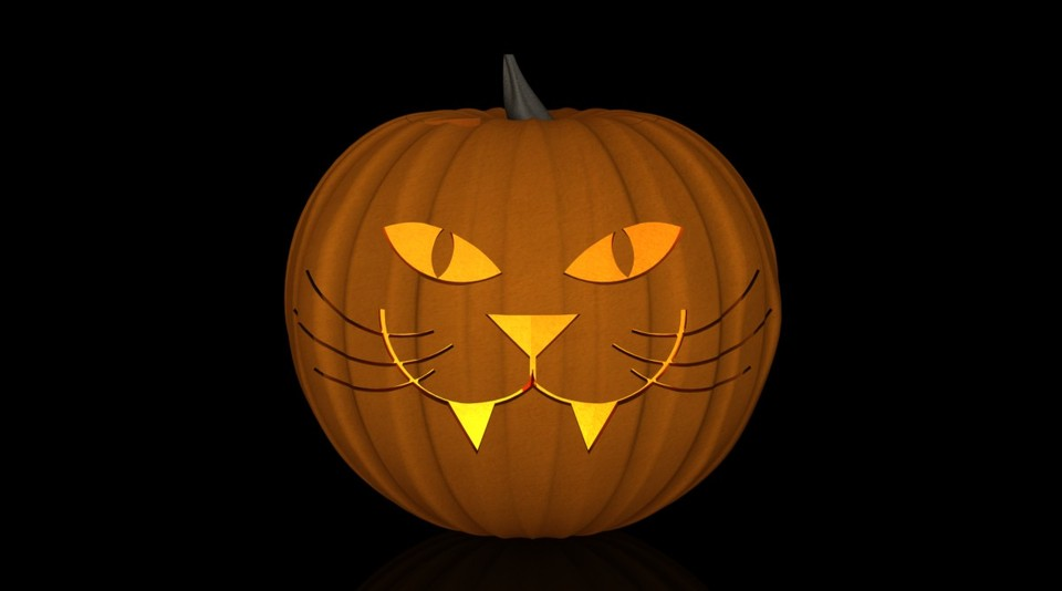 Pumpkin cat carving funny cats
