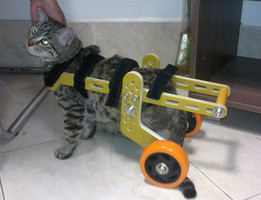Cat Wheelchair