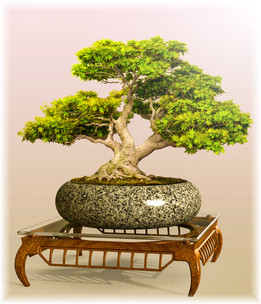 "Bonsai Table ""Scarab"""