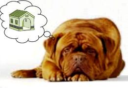 Домашняя будка для собаки