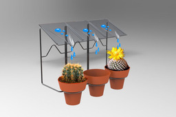 Self watering plant on pots