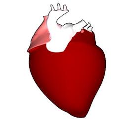 Human's Heart