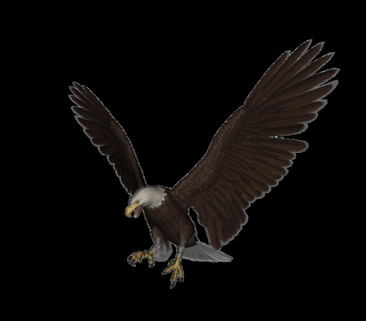 Eagle   3D CAD Model Library   GrabCAD