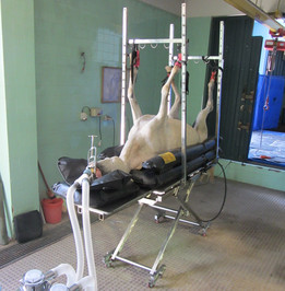 Surgery Table for equines