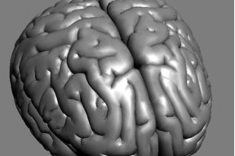 Human Brain Png 3d Human Brain Model
